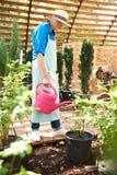 Hög trädgårdsmästare som bevattnar växter royaltyfri fotografi