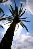 hög tree royaltyfri foto