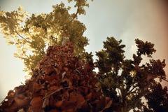 hög tree Arkivbild
