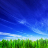 Hög upplösningsbild av nytt grönt gräs och blå himmel Royaltyfri Bild