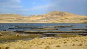 hög våtmark för höjdandes flamingos Royaltyfria Foton