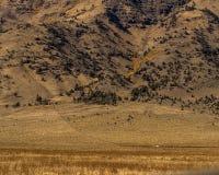 Höga ökenberg i Oregon royaltyfria bilder