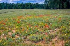 Höga alpina lösa blommor Royaltyfria Bilder