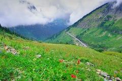 Höga alpina tundrablommor och en väg i tung dimma Fotografering för Bildbyråer
