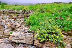 Höga alpina tundrablommor och tung dimma Arkivfoto