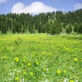 höga berg för blommor Arkivfoto