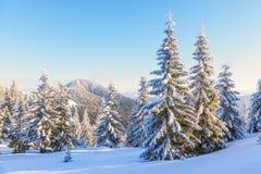 Höga berg och maxima är magiska träd som täckas med snö Fotografering för Bildbyråer