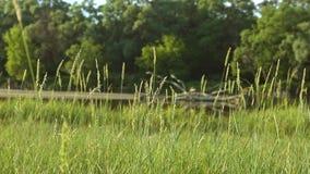 Höga blad av bakgrund Forest River för grönt gräs lager videofilmer