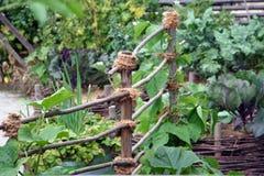 Höga grönsakstrålar Royaltyfri Fotografi