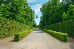 Höga häckar i parkera i Tyskland Arkivbilder