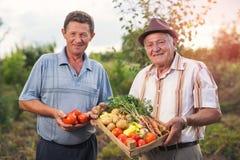 Höga män med skördade grönsaker Royaltyfri Fotografi