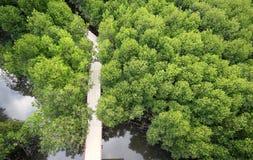 Höga Mangroves Royaltyfria Foton