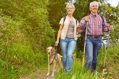 Höga par på en vandring i en skog Royaltyfri Foto