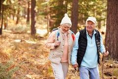 Höga par rymmer händer som fotvandrar i en skog, Kalifornien, USA Royaltyfria Foton