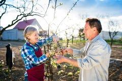 Höga par som beskär äppleträdet Royaltyfria Foton