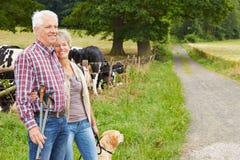 Höga par som fotvandrar med hunden Fotografering för Bildbyråer