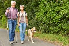 Höga par som fotvandrar med labrador retriever royaltyfri fotografi