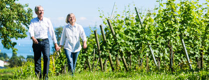 Höga par som har, går i vingård arkivbild