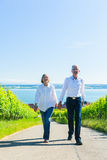 Höga par som har, går i vingård royaltyfri foto