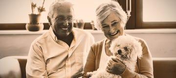 Höga par som rymmer en hund arkivbilder