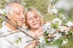 Höga par som tycker om ett ögonblick i deras blomstra trädgård Royaltyfri Foto