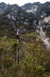 Höga sidor för en trädnedgång ut i höstsäsong Arkivfoton