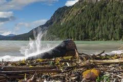 Höga spashes på kanten av sjön Plansee arkivfoto