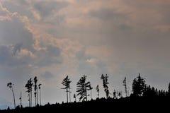 Höga Tatras efter storm Arkivfoton