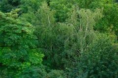 Höga träd i skogsiktsöverkanten Royaltyfri Bild