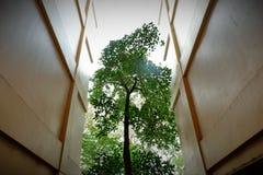 Höga träd som stiger mellan byggnaderna arkivfoton