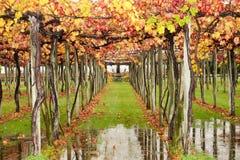 höga vines för höst Royaltyfria Foton