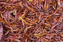 Högar av den torkade röda chili i ny marknad Royaltyfria Bilder