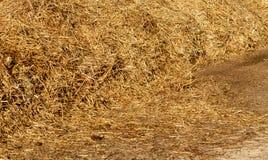 Högar av hö på Churchill Downs arkivfoto