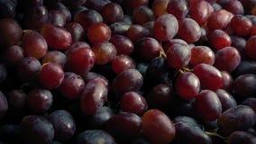 Högar av röda druvor arkivfilmer
