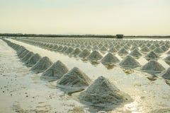 Högar av salt i salt lantgård Royaltyfri Bild