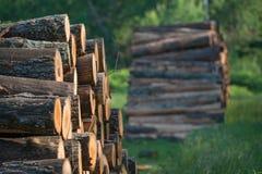 Högar av staplade loggade träd från regulatorn Knowles State Forest i nordliga Wisconsin - DNR har arbetande skogar som är harves royaltyfri foto