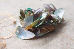 Högen av ångade musslor efter äter royaltyfri foto