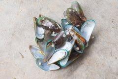 Högen av ångade musslor efter äter royaltyfri bild