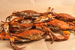 Högen av ångade och kryddade Chesapeakeblått klöser krabbor Royaltyfria Bilder