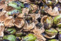 Högen av att torka kokosnöten skalar på jordningen arkivbild