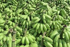 Högen av den omogna bananen kallade kluay khai Royaltyfria Bilder