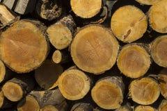 Högen av det olika formatet huggit av trä loggar förberett för vinter Royaltyfri Bild