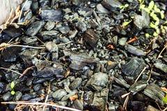 Högen av kol med rostigt spikar och gräs royaltyfria foton