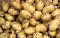 Högen av potatisar för texturerar för bakgrund Royaltyfri Foto