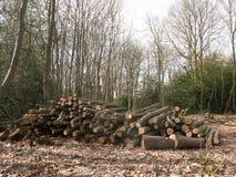 högen av stammar för filialträstubbeträdet klippte ner skogträ w royaltyfri foto