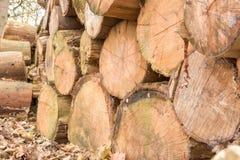 Högen av trä loggar Arkivfoton