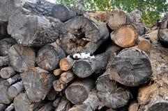 Högen av trä loggar Fotografering för Bildbyråer