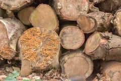 Högen av trä loggar in skogen Royaltyfria Bilder