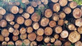 Högen av träjournaler och sörjer filialbakgrund Royaltyfri Bild