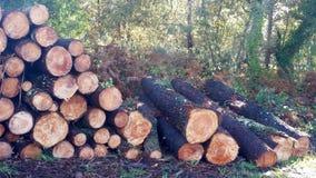 Högen av träjournaler och sörjer filialer Arkivbilder